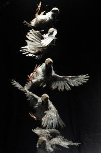 birdfall